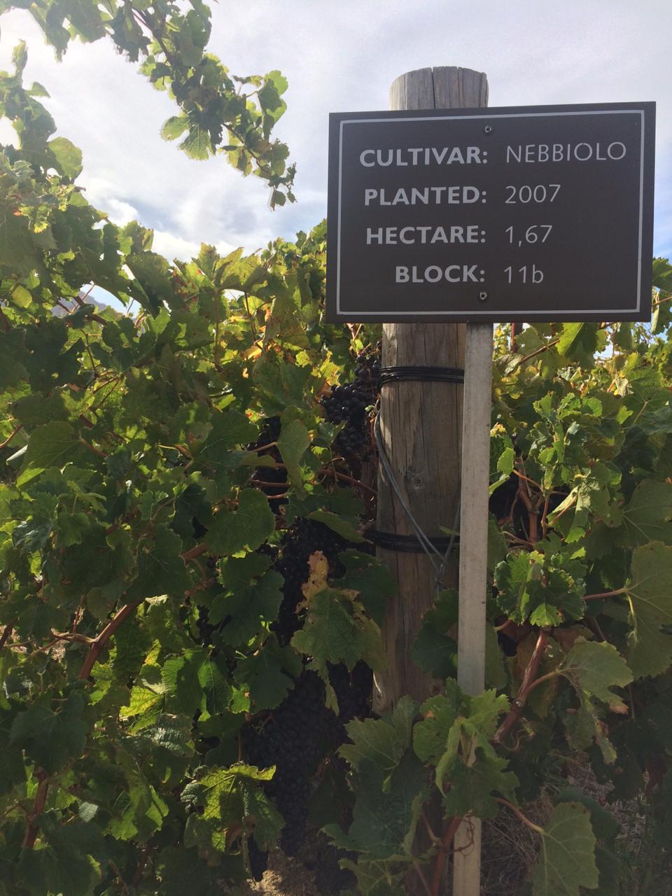 Vitivinicultura sudafricana, un potencial que lo transforma en un gran jugador a nivel internacional