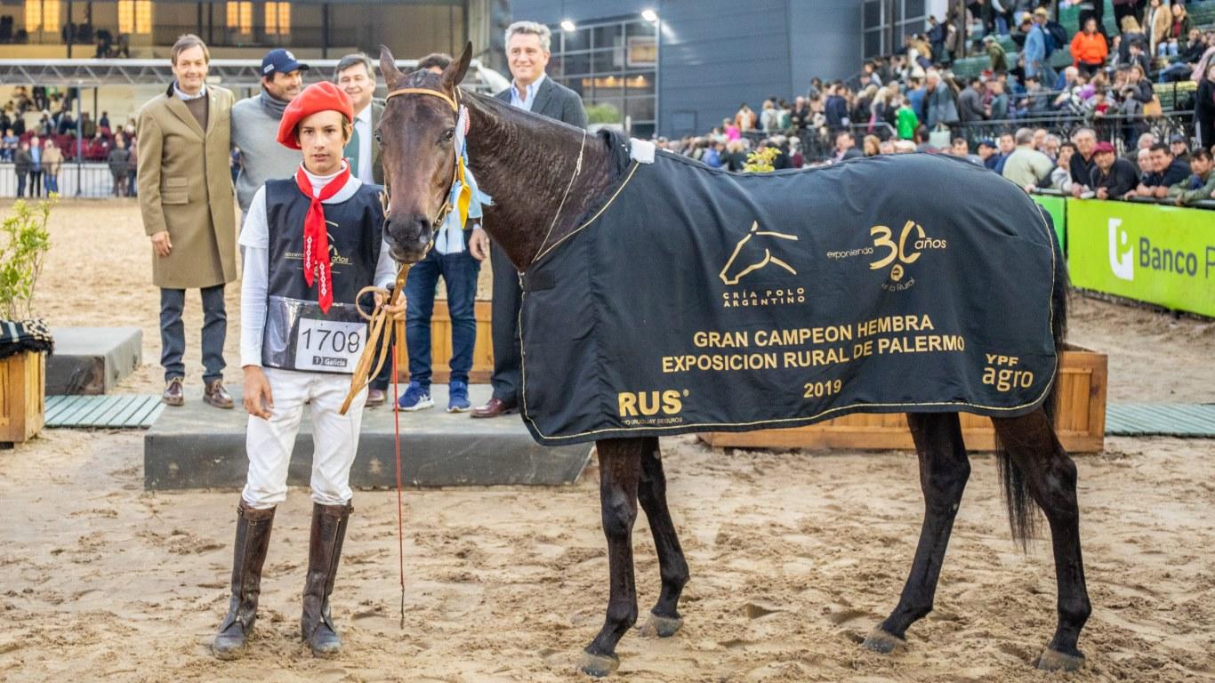 Estos son los Campeones de la Exposición Rural de Palermo 2019